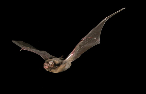 Looks similar, doesn't it? Because this particular species of bat is so difficult to photograph, the researchers would release the bat through the frame Steve setup. Source: Supplied