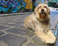 dog-in-Hosier-Lane-chris-sc