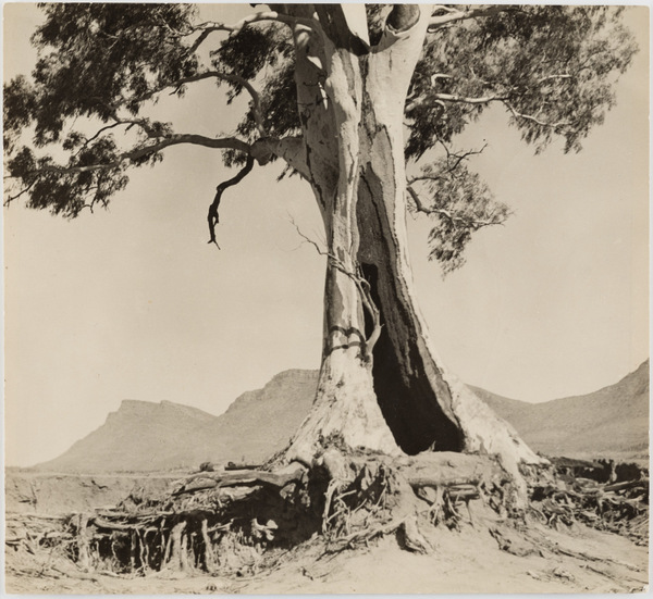 2015.010.003. Harold Cazneaux, Spirit of Endurance, 1937, gelatin silver print. Source: Peter and Olivia Farrell/Supplied. Australian Photography Collection